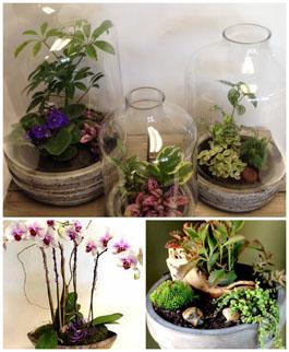 Succulents, Terrariums, and Plants [sent]